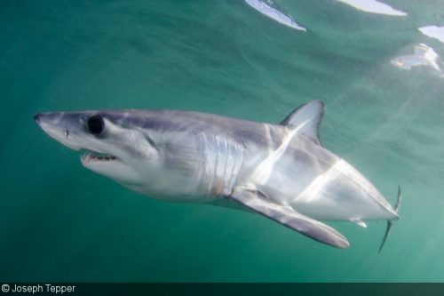 Shark Skin: Inspiring Med Tech of the Future